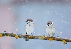 Dos pájaros divertidos se están sentando en el parque en una rama durante un spr Foto de archivo