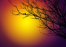 Dos pájaros en árbol en puesta del sol Imágenes de archivo libres de regalías