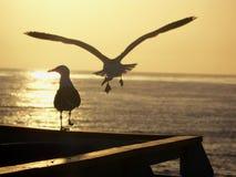 Dos pájaros en la puesta del sol Imagen de archivo libre de regalías