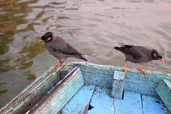 Dos pájaros en un barco en el río Ganga, Varanasi, Uttar Pradesh, la India Imagen de archivo