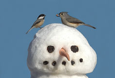 Dos pájaros en un muñeco de nieve Imagen de archivo