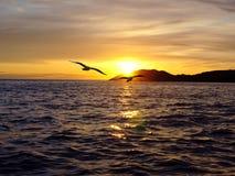 Dos pájaros en volar sobre el mar en la puesta del sol imagen de archivo