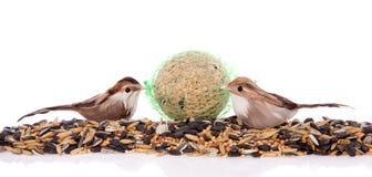 Dos pájaros que comen los gérmenes del invierno Foto de archivo libre de regalías