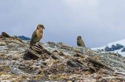 Dos pájaros verdes que descansan sobre la cima de la montaña Fotos de archivo