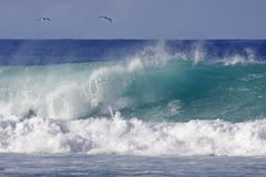 Dos pájaros y una onda Imagenes de archivo