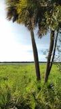 Dos palmas, parque de estado del myakka florida Fotografía de archivo