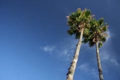 Dos palmeras Foto de archivo libre de regalías
