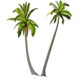 Dos palmeras, Imágenes de archivo libres de regalías