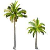 Dos palmeras, Fotos de archivo libres de regalías