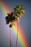 Dos palmeras con el arco iris Fotos de archivo
