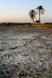 Dos palmeras en el borde Imagen de archivo