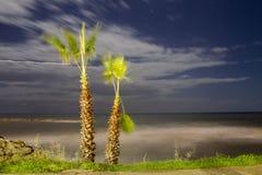 Dos palmeras en la puesta del sol Foto de archivo libre de regalías