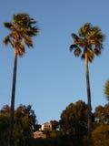 Dos palmeras grandes por puesta del sol Imagen de archivo libre de regalías
