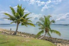 Dos palmeras que crecen sobre una playa fotos de archivo
