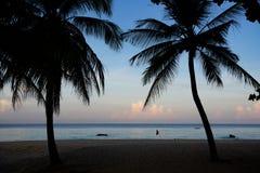Dos palmeras que se colocan en el océano sin la gente foto de archivo