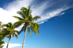Dos palmeras y un cielo azul fotografía de archivo libre de regalías
