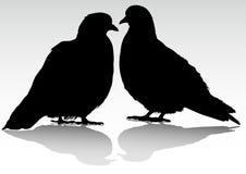 Dos palomas Imagen de archivo libre de regalías