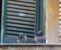 Dos palomas fotos de archivo libres de regalías