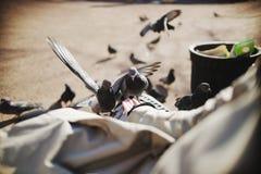Dos palomas alegres que comen con las manos Imagenes de archivo