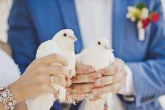 Dos palomas blancas como la nieve en las manos de los recienes casados Fotografía de archivo