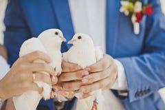 Dos palomas blancas como la nieve en las manos de los recienes casados Foto de archivo
