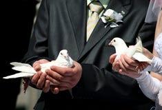 Dos palomas blancas en manos de un par casado Foto de archivo