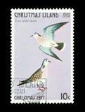 Dos palomas de la tortuga Imagenes de archivo