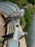 Dos palomas de madera Imagen de archivo