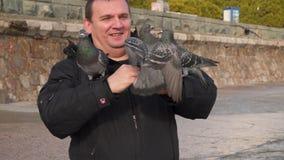 Dos palomas en las manos de un hombre están luchando almacen de metraje de vídeo