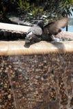 Dos palomas en una fuente Fotografía de archivo libre de regalías