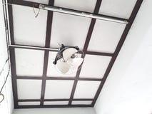 Dos palomas, jerarquizando en una fan de techo blanca fotografía de archivo libre de regalías