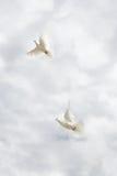 Dos palomas que vuelan en el cielo Fotografía de archivo