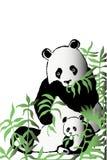Dos pandas en los matorrales de bambú Imagenes de archivo