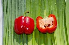 Dos paprikas rojas gordas. Orions. Foto de archivo