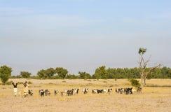 Dos pastores con la manada Fotografía de archivo libre de regalías