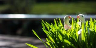 Dos patos de Pascua en un jardín Imagen de archivo