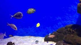 Dos peixes azul debaixo d'água vídeos de arquivo