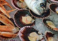 Dos peixes vida ainda Dorado dirige, mexilhões nos shell no gelo Marisco fresco da mistura Fotografia de Stock Royalty Free