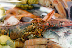 Dos peixes vida ainda Lagosta do marisco e camarões grandes vermelhos no gelo Fotografia de Stock