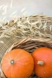 Dos pequeñas calabazas anaranjadas brillantes de Heilroom en cesta de mimbre secan a Autumn Plants en la tabla de la rota en terr Imagen de archivo libre de regalías