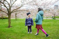 Dos pequeñas hermanas lindas que se divierten en jardín floreciente de la cereza Fotografía de archivo
