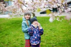 Dos pequeñas hermanas lindas que se divierten en jardín floreciente de la cereza Imágenes de archivo libres de regalías