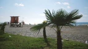 Dos pequeñas palmas verdes que crecen en un centro turístico del mar con la gente en Georgia en el slo-MES almacen de metraje de vídeo