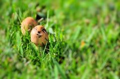 Dos pequeñas setas en hierba verde Imagen de archivo