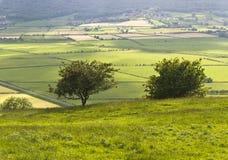 Dos pequeños árboles sobre el valle de Lyth Foto de archivo libre de regalías