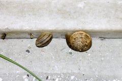 Dos pequeños caracoles en un paso de piedra Foto de archivo