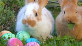 Dos pequeños conejitos lindos se sientan en la hierba cerca de los huevos de Pascua