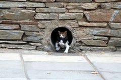 Dos pequeños gatitos Imagenes de archivo