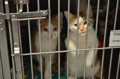 Dos pequeños gatitos lindos del refugio foto de archivo libre de regalías