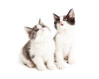 Dos pequeños gatitos que miran para arriba Foto de archivo libre de regalías